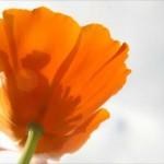 玄関に花を飾る時におすすめの色は?風水を見て運気アップ!