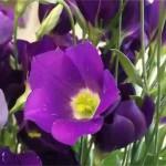 母の日のプレゼントでおしゃれな花はコレ!予算3000円以内で!