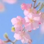 2014 花見スポットと桜の開花の記事のまとめ