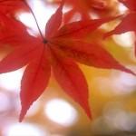 関東の紅葉2014!時期とおすすめの絶景スポットはココ!